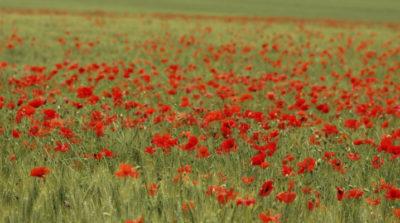 Анђели с прве линије: Ратна поезија Републике Српске